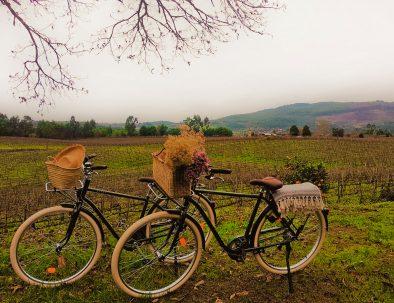 terra rosa Experiências na quinta Aluguer de Bicicletas